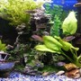 20 gallons freshwater fish tank (mostly fish and non-living decorations) - My current 2 Foot Freshwater tank.