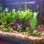 freshwater fish tank (mostly fish and non-living decorations) - Communtity Updated