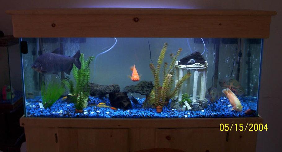 100 Gallon Freshwater Aquarium - 1000+ Aquarium Ideas