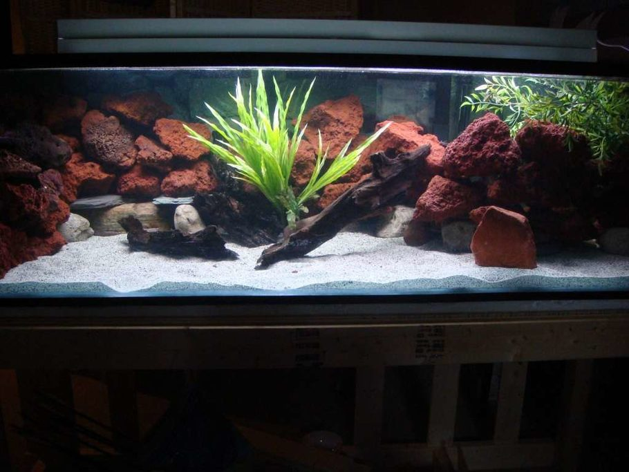 Cichlidfinatic 39 s freshwater tanks photo id 9530 full for Lava rock fish tank