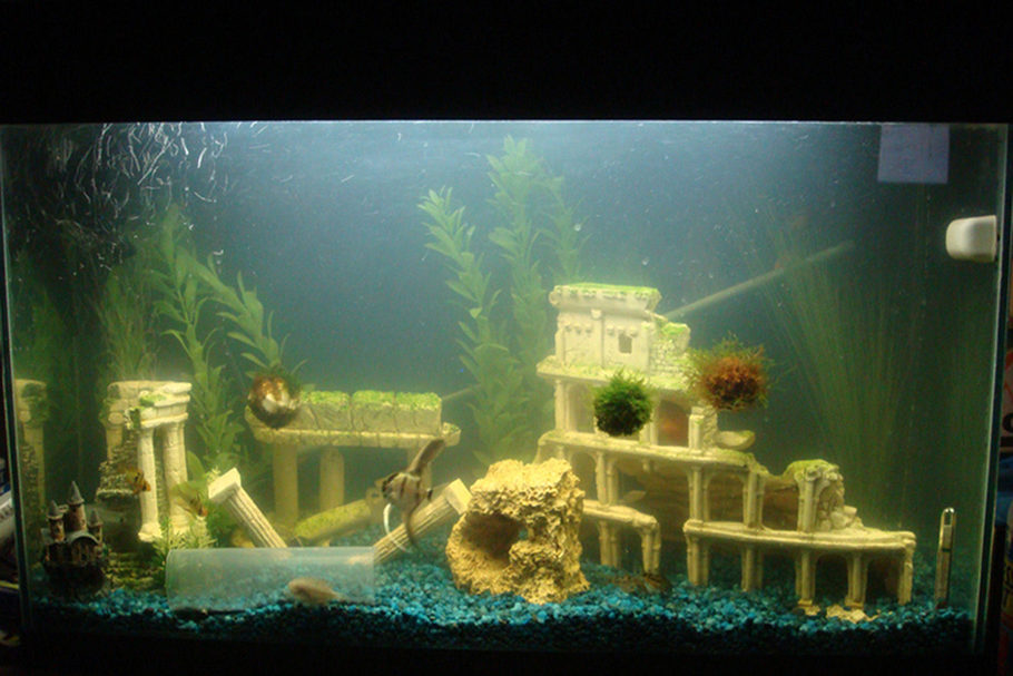 Miketran33 39 s freshwater tanks photo id 17156 full for Eclipse fish tank