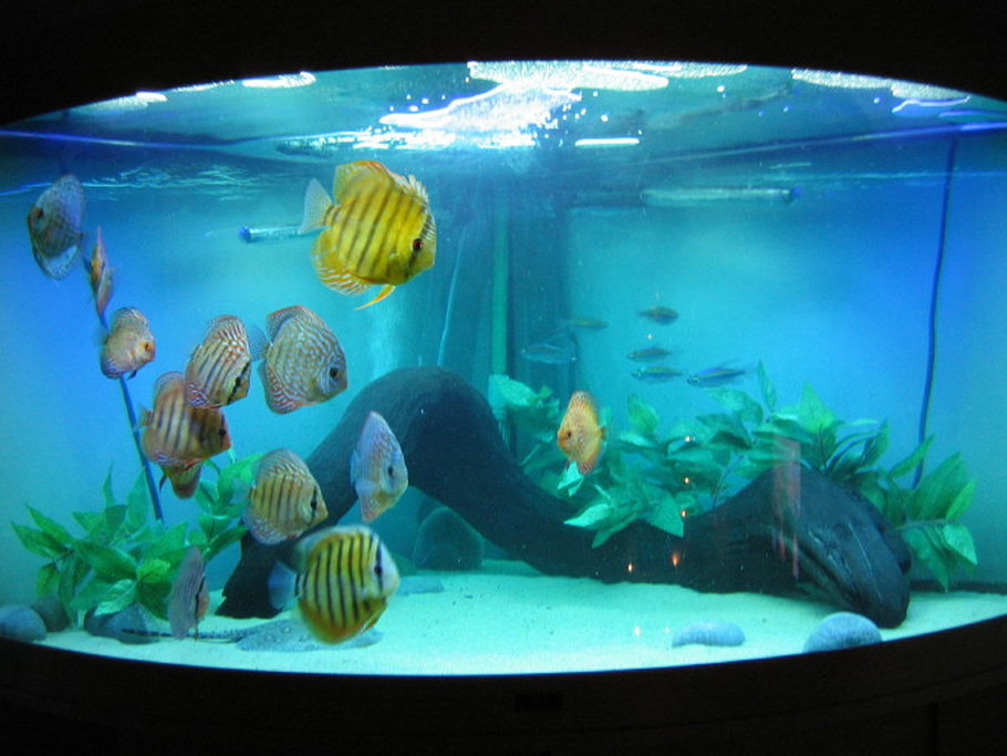 Coops123 39 s freshwater tanks photo id 1745 full version for Stingray fish tank