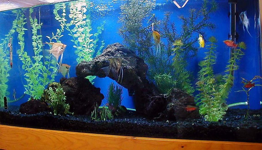 Fishmama 39 s freshwater tanks photo id 21005 full for Black fish tank gravel