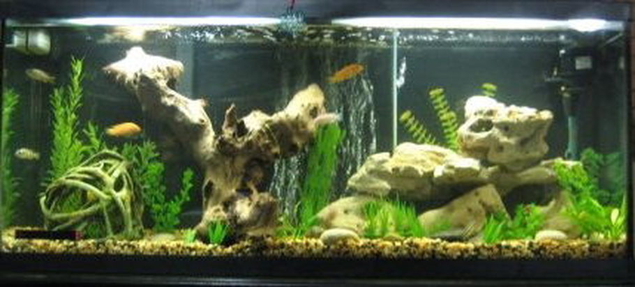 Cichlid Tank Added Petrified Wood And Some Other Rock Formations
