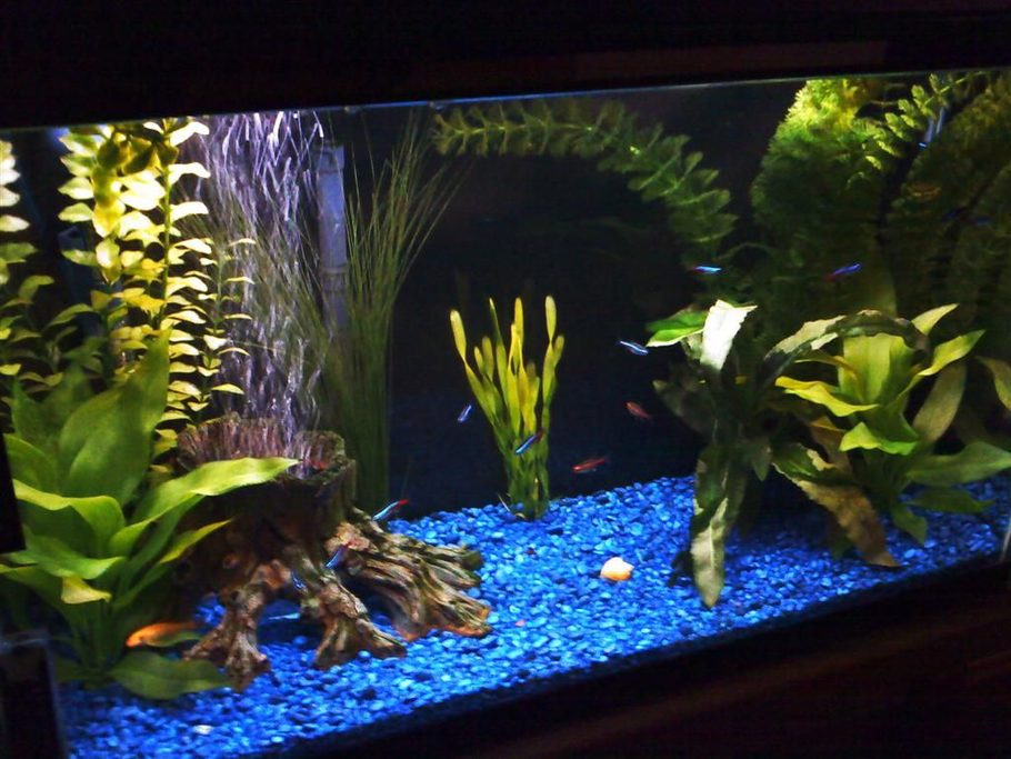 Golden algae eater and neon/glow light tetras in sight, bubbles coming up through the log stump.