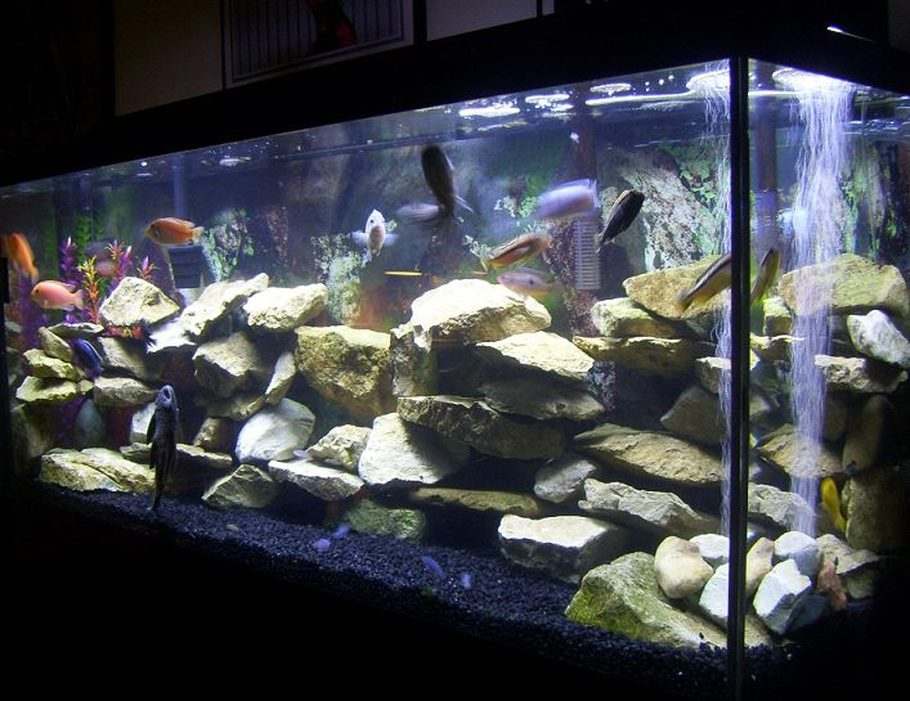 Zedext S Freshwater Tanks Details And Photos Photo 29377