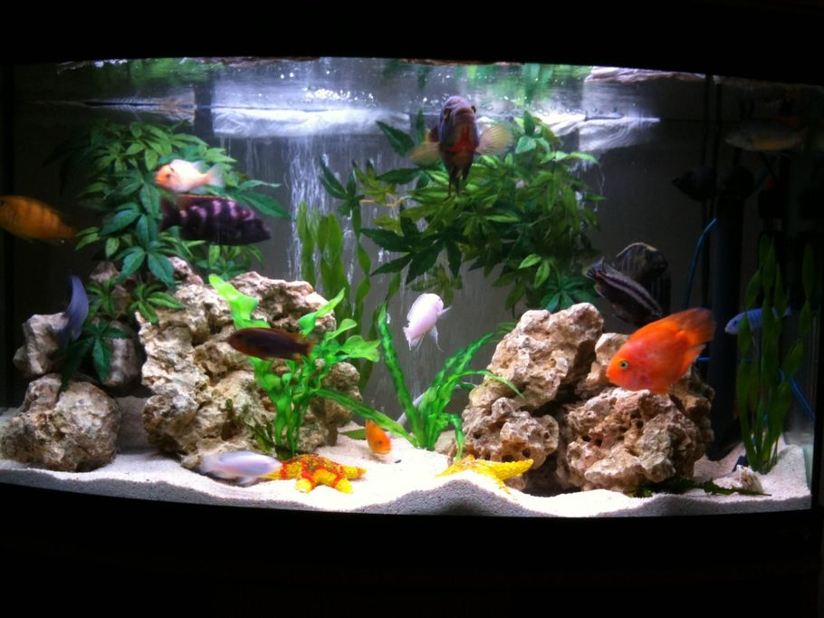 how to add colour to bottom of fish tank