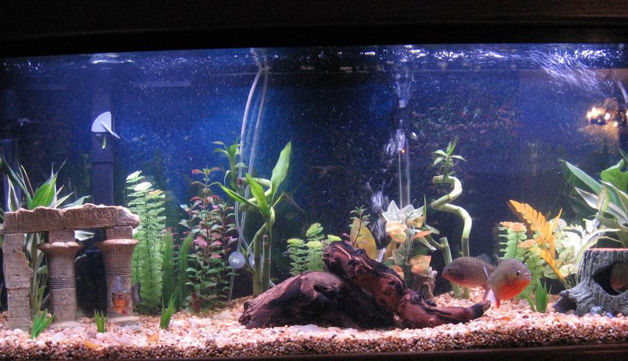 Bocifer 39 s freshwater tanks details and photos photo for Piranha fish tank
