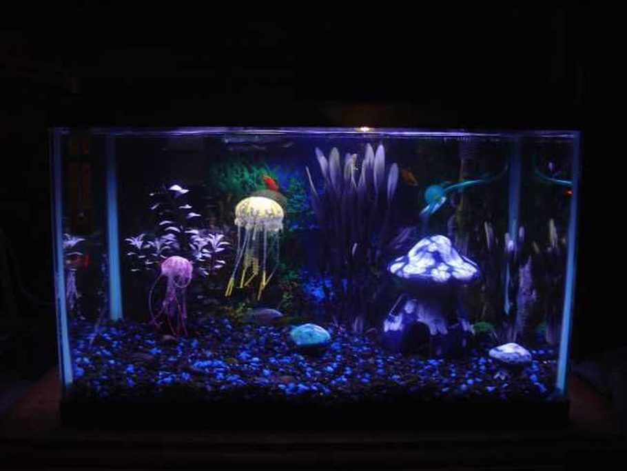 Ccanemone 39 s freshwater tanks photo id 32371 full for 10 gallon fish tank cover
