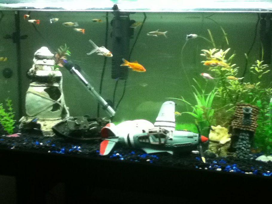 Yabbyman S Freshwater Tanks Details And Photos Photo 36727 Ratemyfishtank