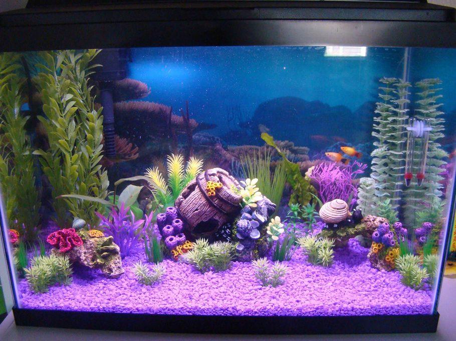 Laurenj 39 s freshwater tanks photo id 36779 full version for Aquarium decoration ideas freshwater