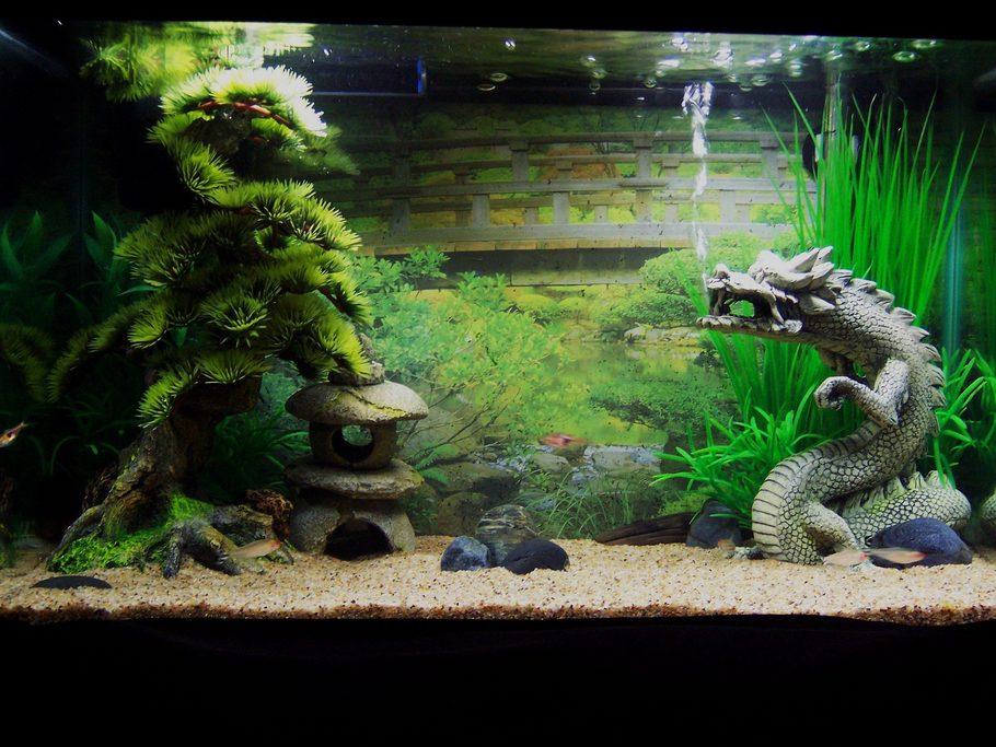 Blackwolf 39 s freshwater tanks photo id 38554 full for Good fish for 10 gallon tank
