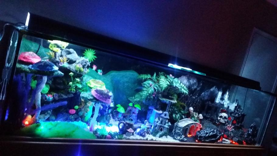 This is my Fantasy Themed Fish Tank (zoom into the pic to see or look at my additional pics) - i handcrafted custom made all the decor. This unique aquarium has it all with air animated moving bridges, underwater sand waterfalls, realistic hot lava rivers and pits, different colored lighted sections that can be changed to any possible color or multiple mode settings with a simple pushing of a button using your smartphone, even has realistic lightning above the evil castle.  Fairy side has a sun that changes colors along with the sky to look like a beautiful sunset.