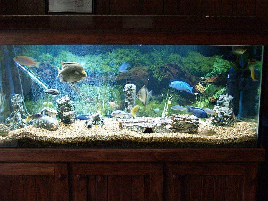 Peter8504 39 s freshwater tanks photo id 7877 full for Electric fish tank