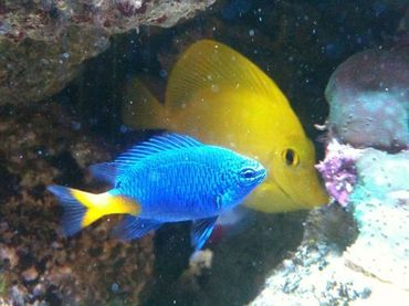 The Benefits of Purchasing Saltwater Fish Online