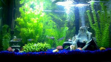 Types of Freshwater Aquarium Lighting