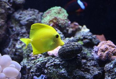 Wavemakers for Saltwater Tanks