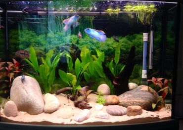 What is an Unfiltered Tank and How do I Cultivate One?