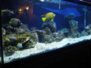 Maintaining Your Saltwater Tank