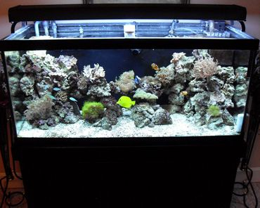 Creating an Aquascape and Choosing Fish