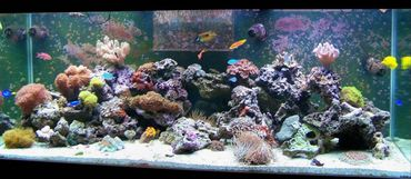 Stocking Salt Water Reef Tanks