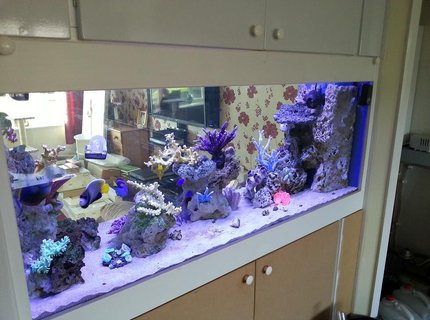 130 gallons saltwater fish tank (mostly fish, little/no live coral) - New in wall tank, unfinished cabinet