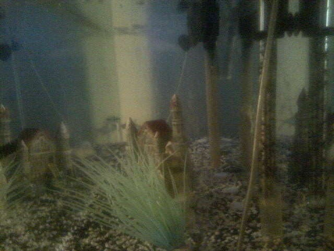 fish tank picture - my tank..im still decorating
