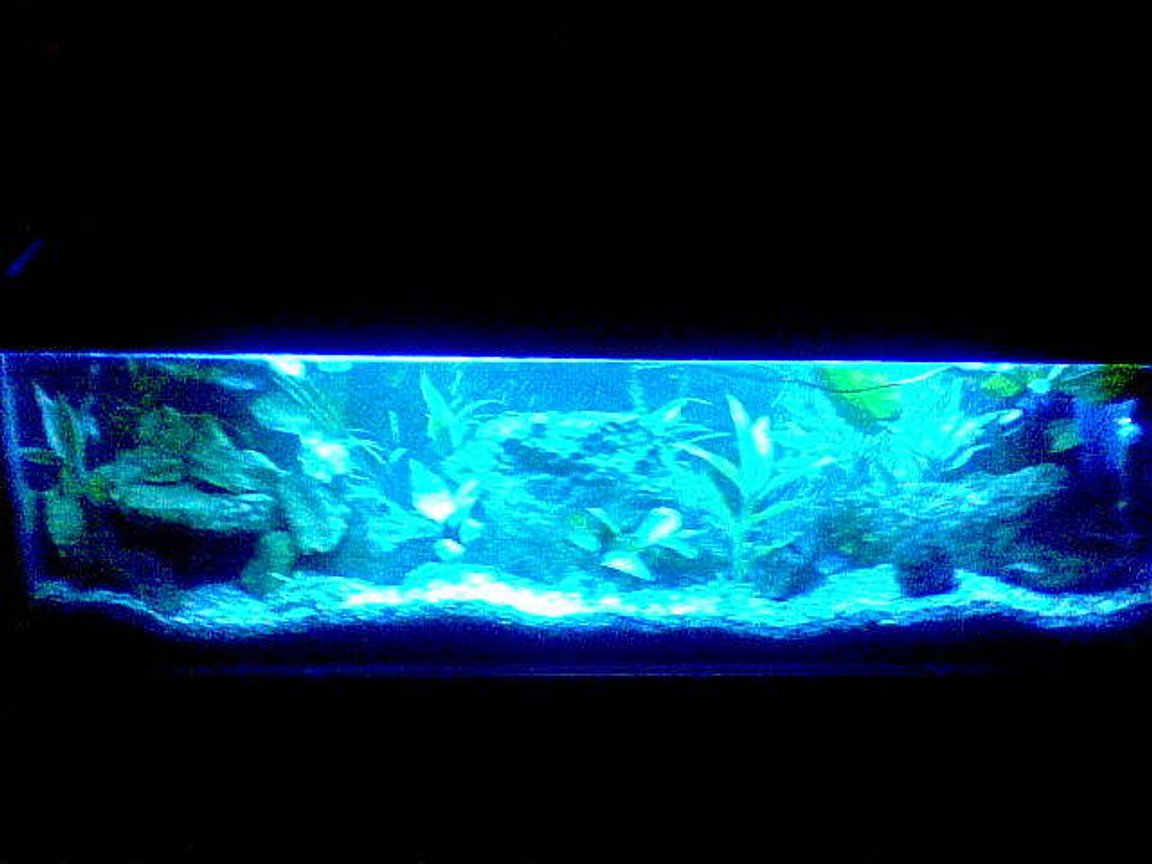 fish tank picture - 4ft tank at night