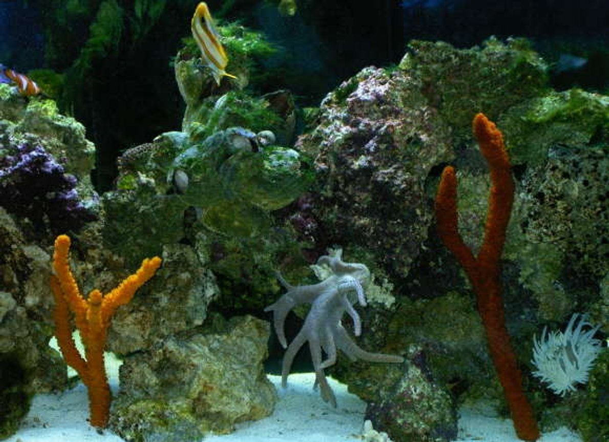fish tank picture - sponges and coral