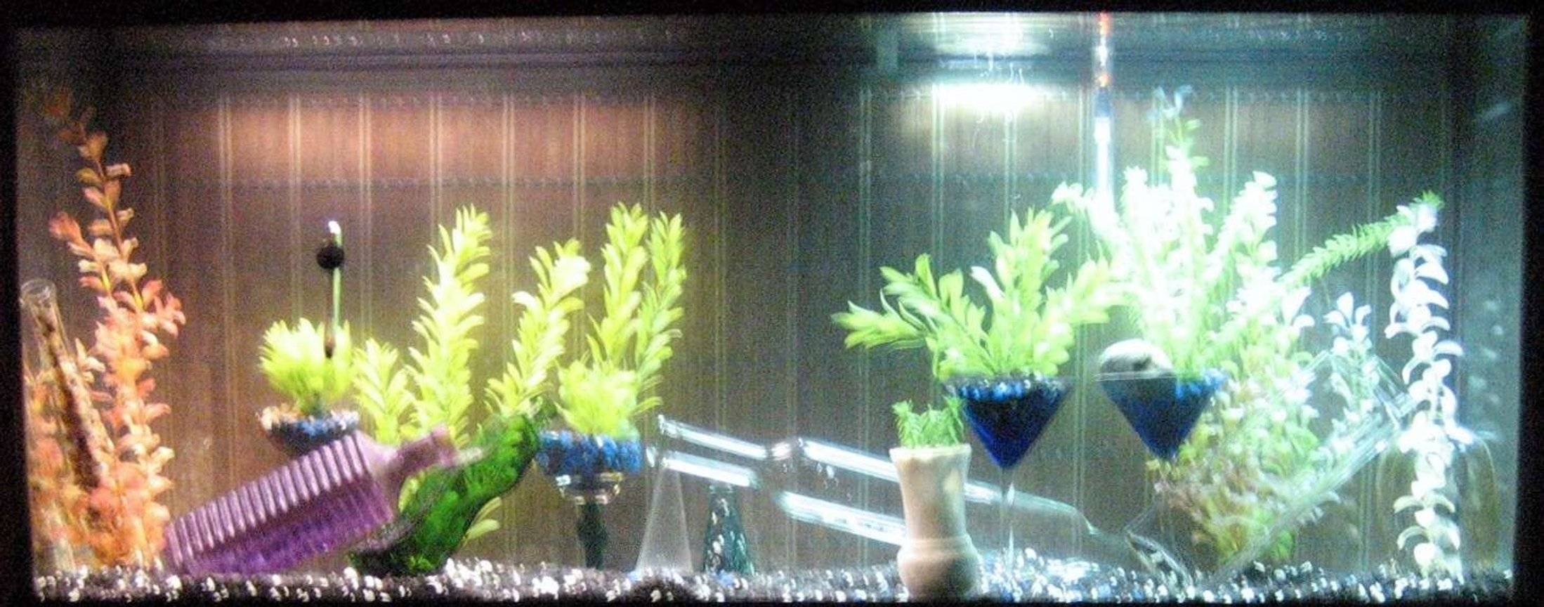 fish tank picture - before the fish