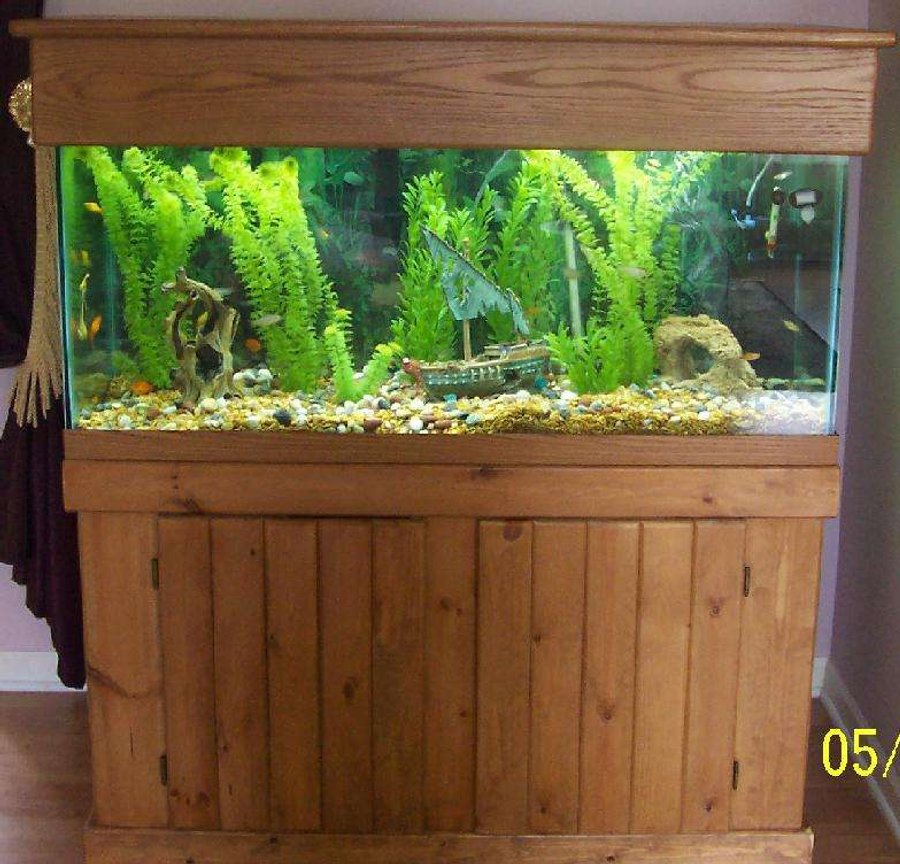 fish tank picture - 80 gallon