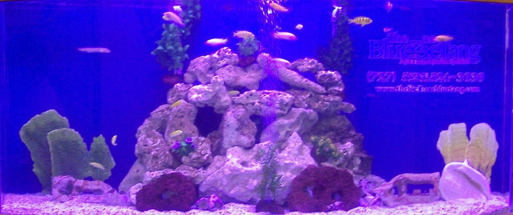 fish tank picture - Our 500 gallon tank