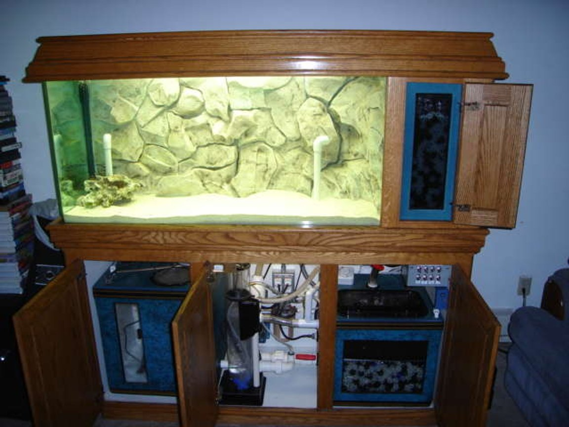 fish tank picture - Here is what the system looks like