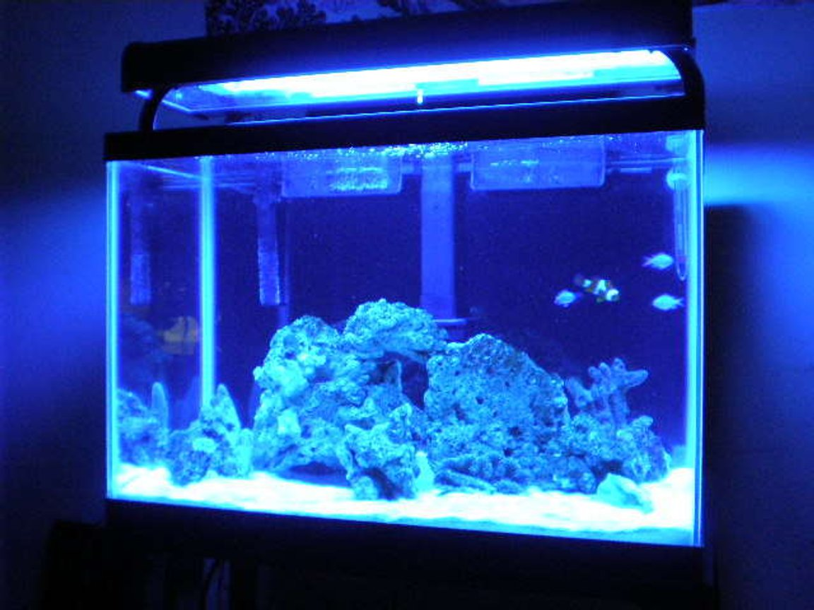 fish tank picture - new lighting