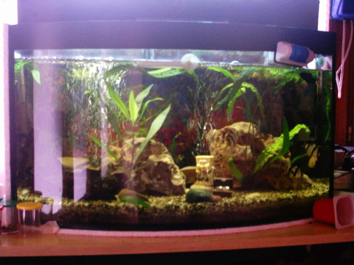 fish tank picture - new tank