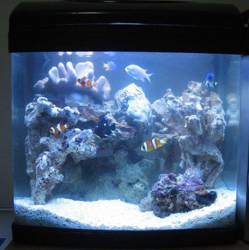 fish tank picture - 1 WEEK OLD My 16 litre (4 gallon) reef tank : )