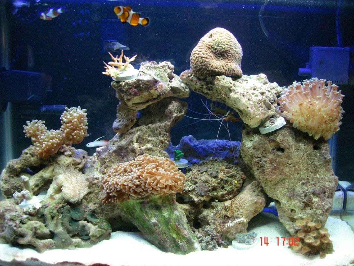 fish tank picture - (10/14/07) 30 Gallon Bow Front Reef Tank