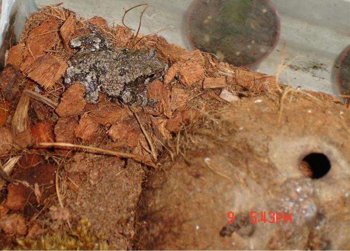 fish tank picture - My gray tree frogs in my tank!