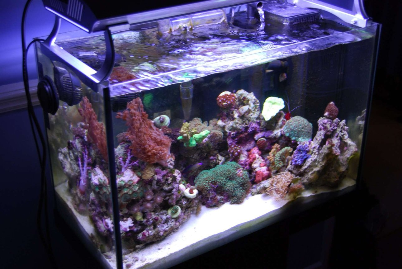 fish tank picture - overhead view