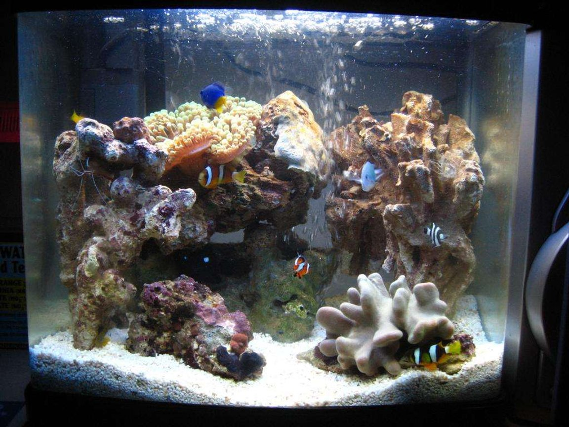 fish tank picture - 2 WEEKS OLD My 16 litre (4 gallon) reef tank : )