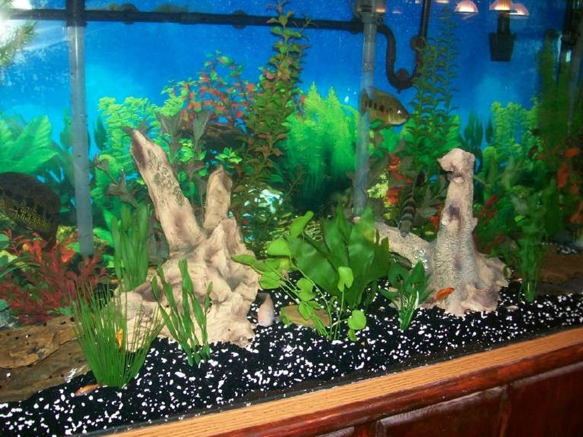 fish tank picture - yet another view