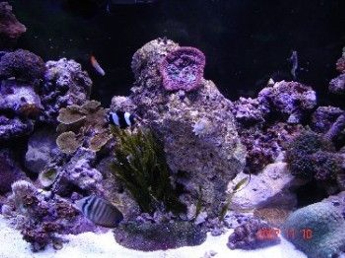 fish tank picture - middle shot
