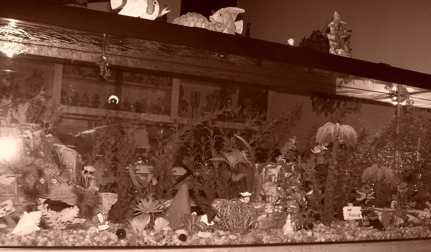 fish tank picture - 125 gallon black & white