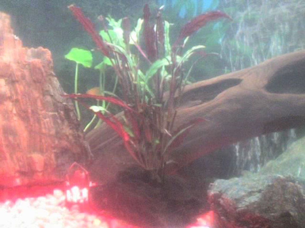 fish tank picture - botton of 30 gallons tank