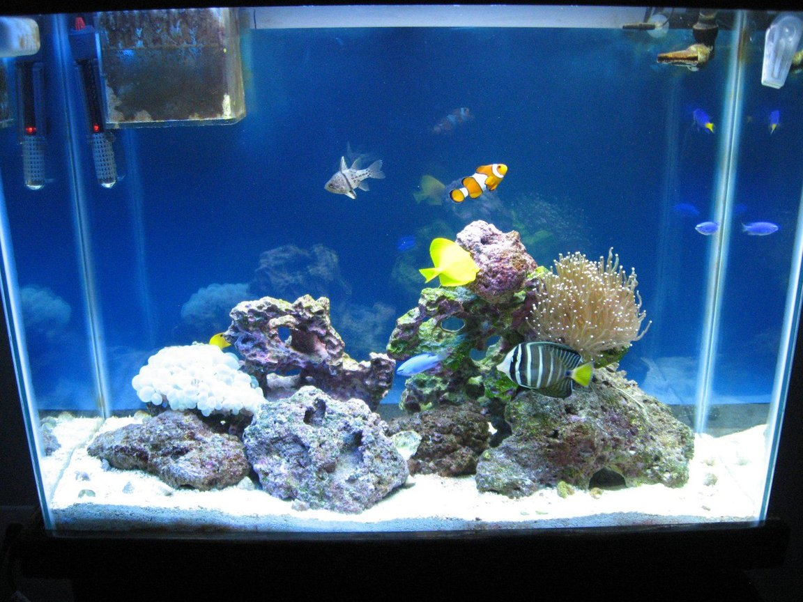 fish tank picture - Whole tankview.
