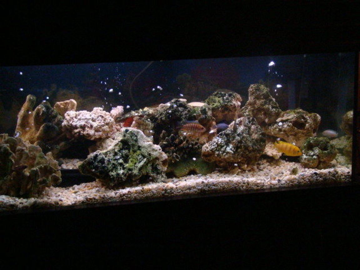 fish tank picture - my new set up new substraight 8 new tenants in the mansion