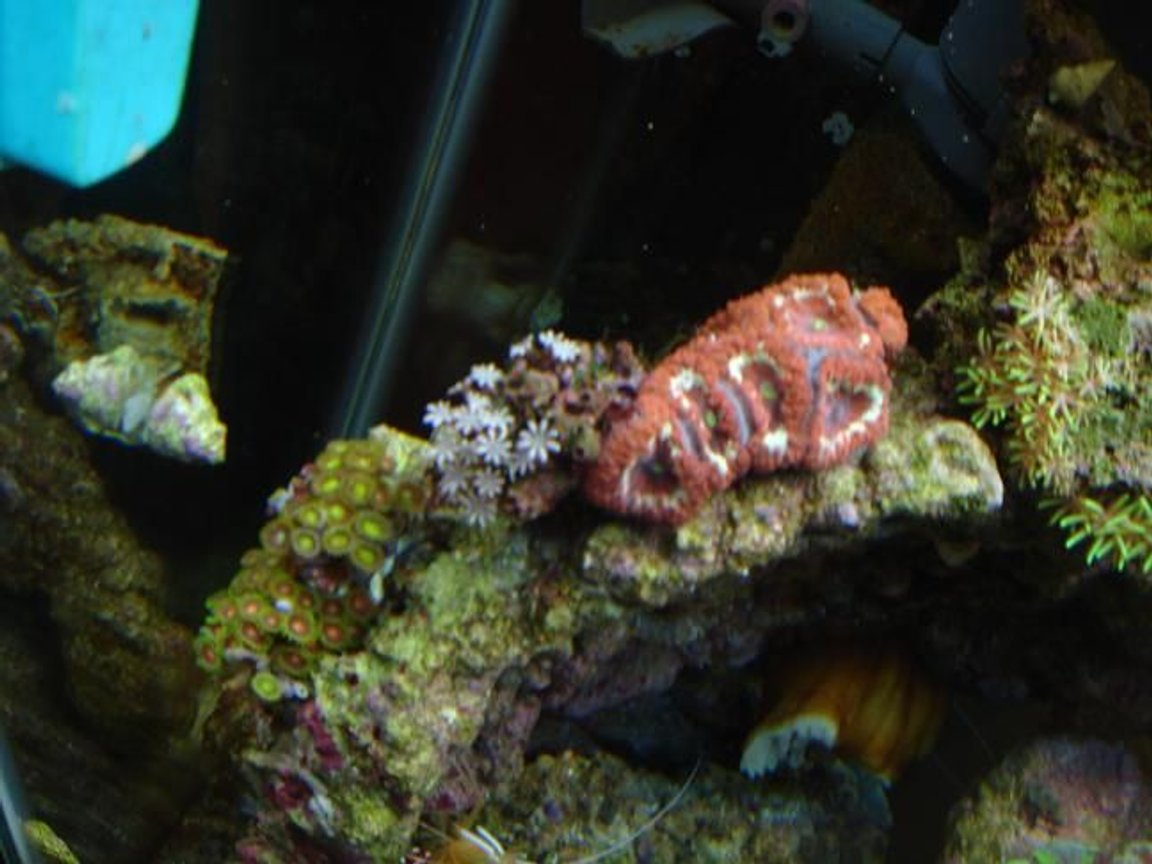 fish tank picture - blastamusa (hope my spelling is correct) and some zoos