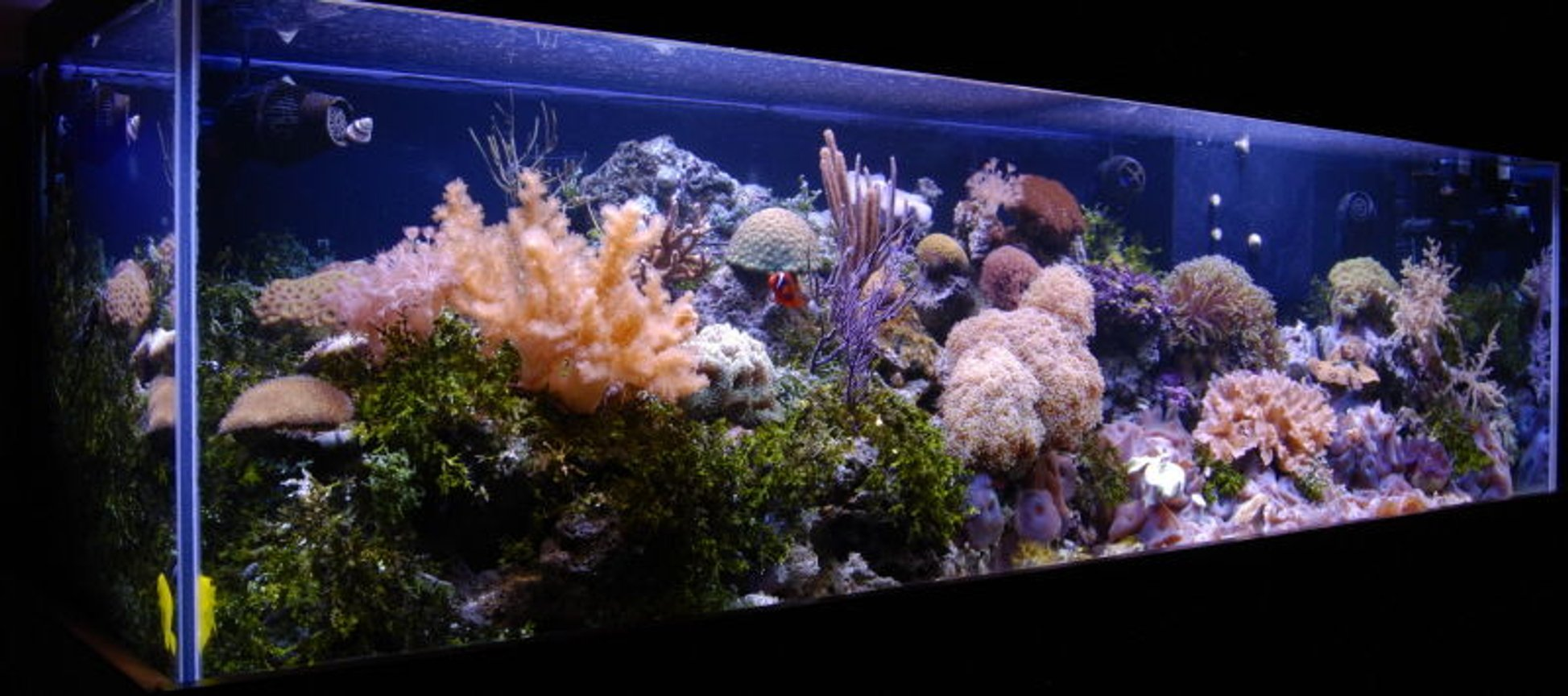 fish tank picture - Tank shot from left 125 reef