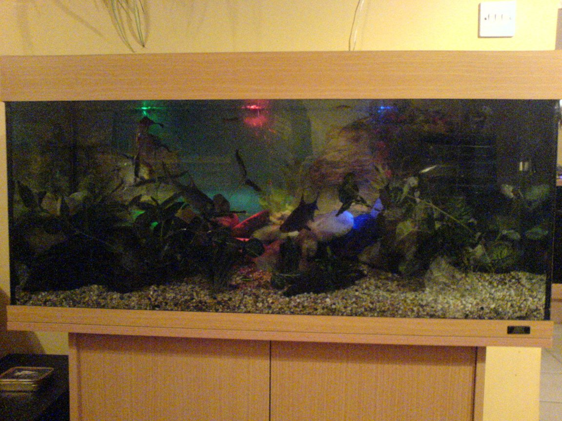 fish tank picture - Night Night fishy's. Sorry about the quality
