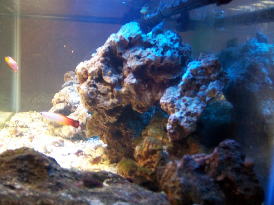 fish tank picture - updated pic
